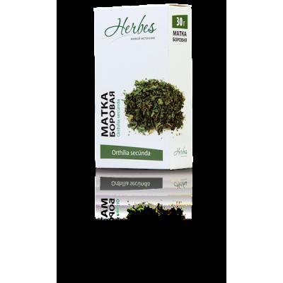 Borovaya matka, grass (Orthilia secunda)